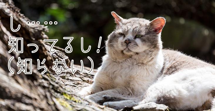 知ったかぶりの猫