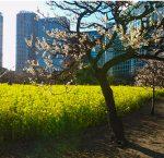 都会のオアシス! 天気の良い日は浜離宮恩賜庭園で癒されよう