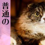直虎36話「井伊家最後の日」まさかの龍雲丸が大勝利! ……まじかよ!!