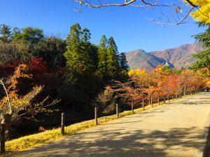 堀を囲む紅葉