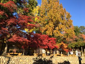 本丸跡の木々