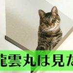 直虎23話「盗賊は二度仏を盗む」南渓和尚の策略と演技が光る回でした