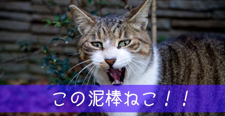 この泥棒猫!