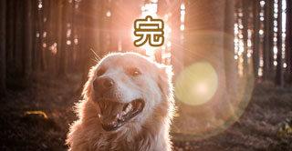 西郷どん第47話「敬天愛人」よかドラマでございもした。