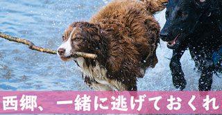 西郷どん第12話「運の強き姫君」覚悟を決めた篤姫様イケメンすぎィ!!