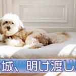 西郷どん第37話「江戸無血開城」新しい時代の幕開け!…の前に波乱