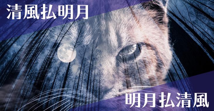 月と風と猫