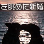 西郷どん第33話「糸の誓い」日本初の新婚旅行は龍馬……ではなく小松帯刀説