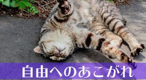 直虎24話「さよならだけが人生か?」周りの登場人物から見た直虎の評価
