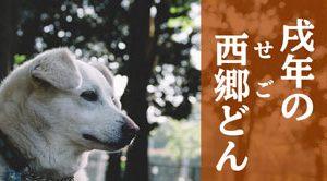 西郷どん第1話「薩摩のやっせんぼ」朗らかな情景、じゃっどん何言ってるか分からん!!