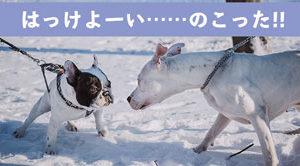 西郷どん第5話「相撲じゃ!相撲じゃ!」 ガチ相撲で殿に勝って大ピンチ!?