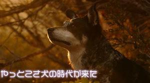 西郷どん第39話「父、西郷隆盛」やっとわんこ(つんちゃん)出てきた!!